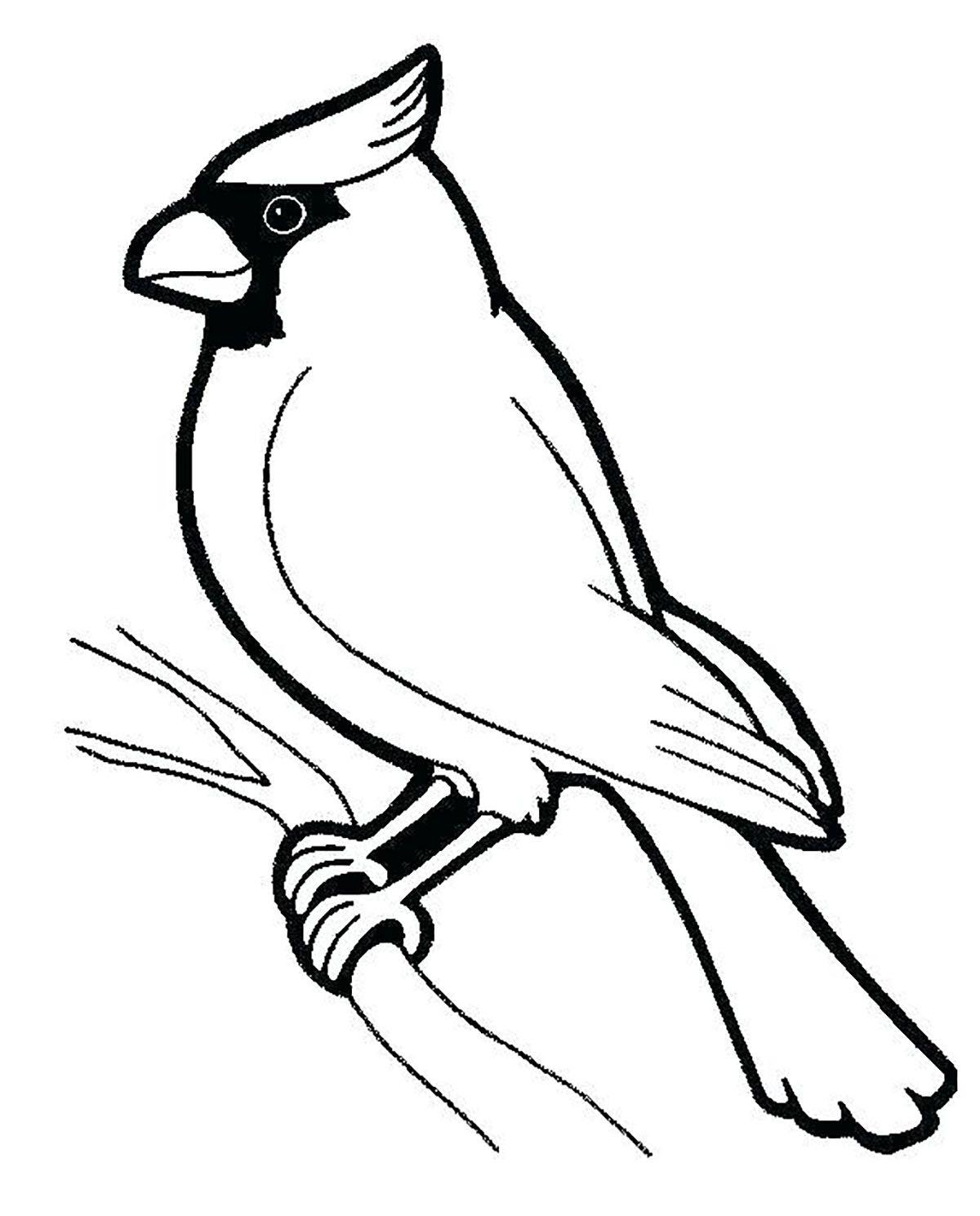 Tranh tô màu con chim đẹp cho bé