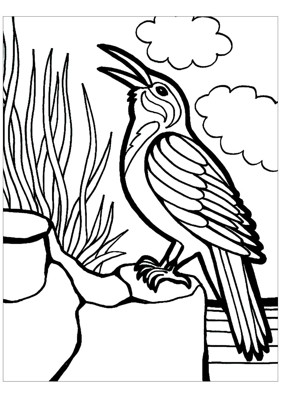 Tranh tô màu con chim đẹp, sắc nét
