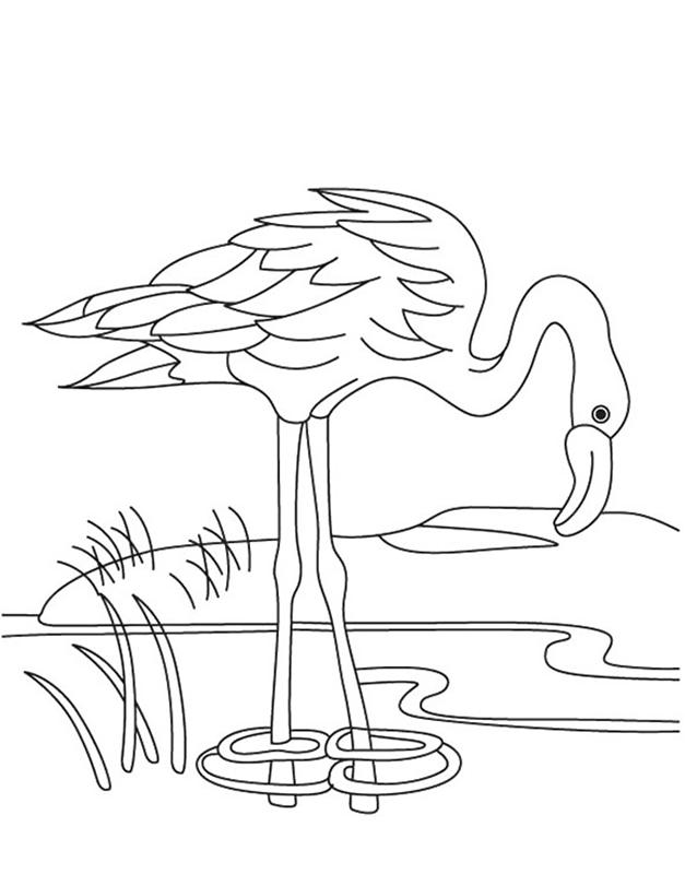 Tranh tô màu con chim hồng hạc