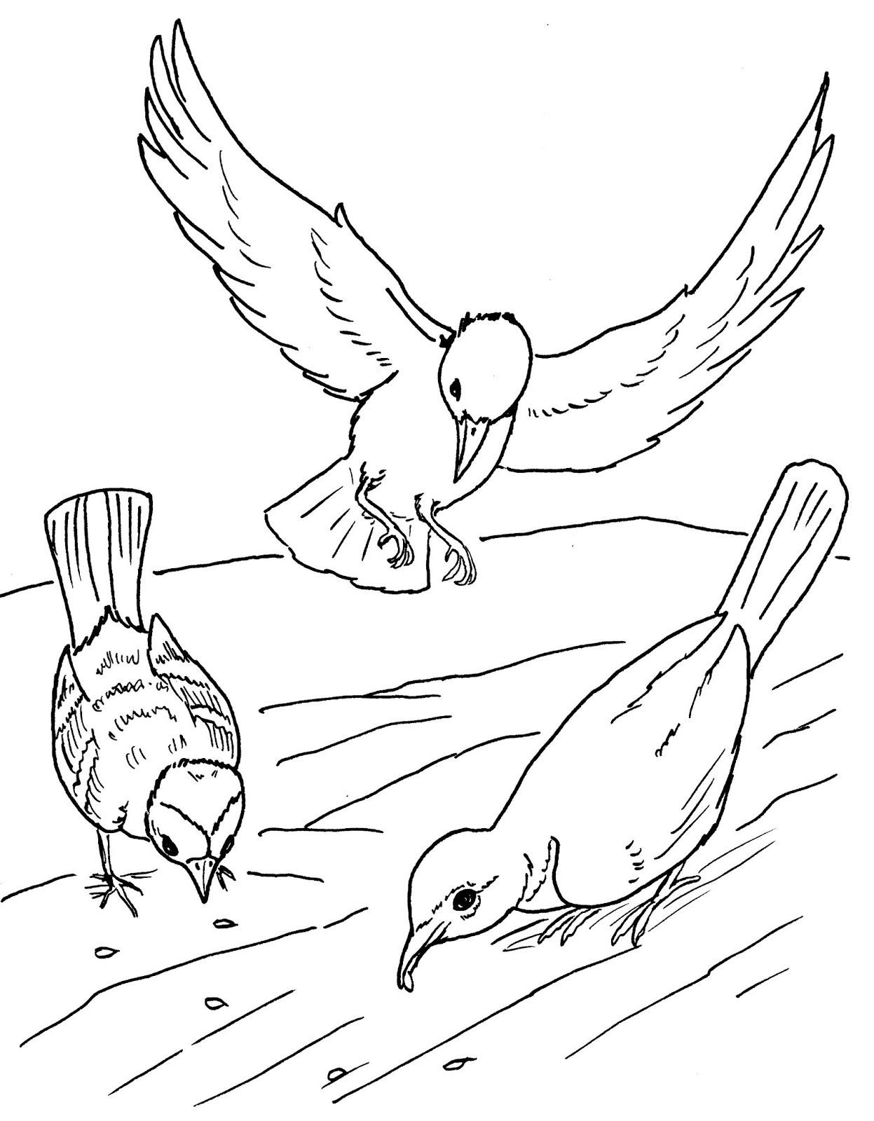Tranh tô màu con chim nhặt thóc