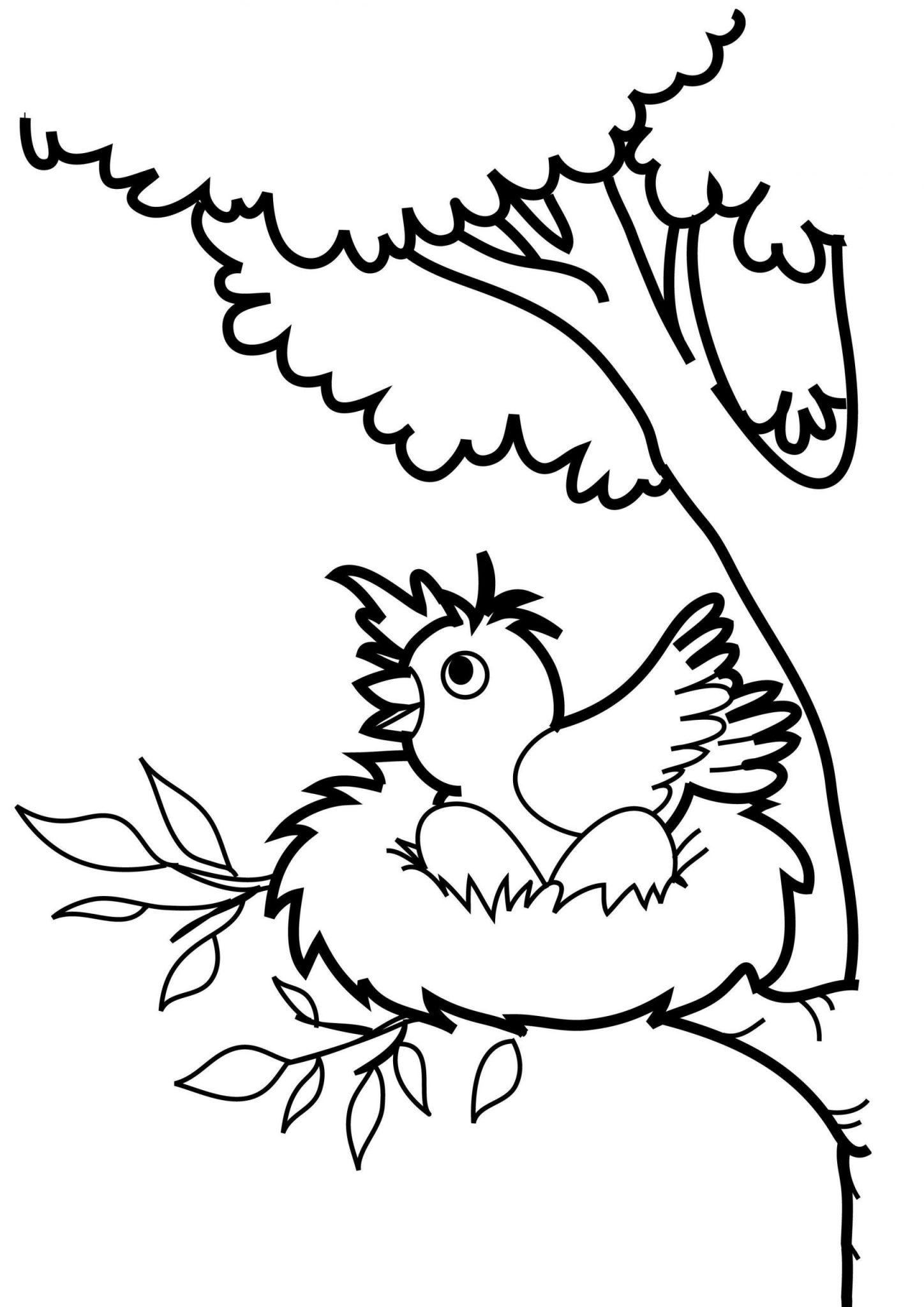 Tranh tô màu con chim trên tổ