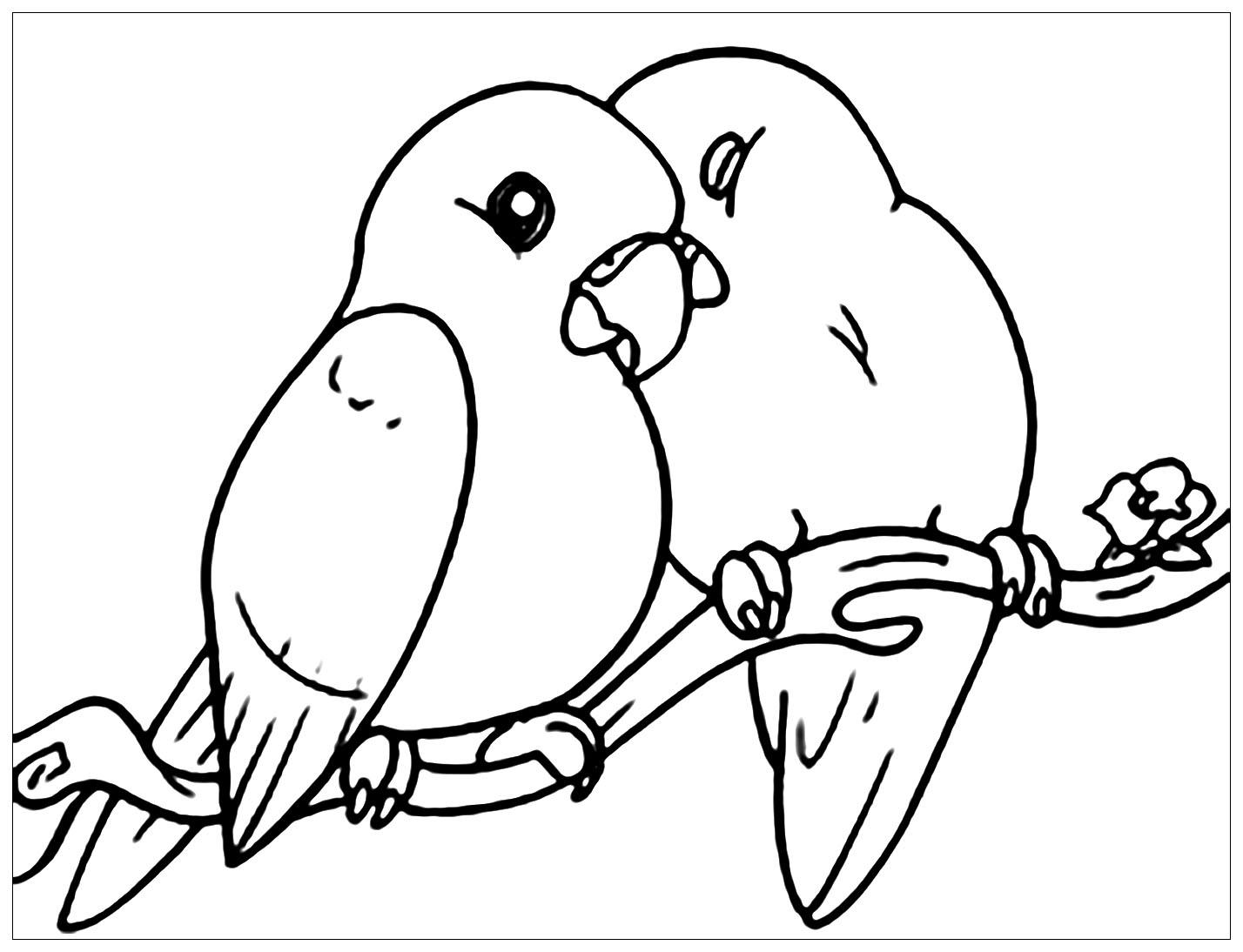 Tranh tô màu đôi chim cực đẹp