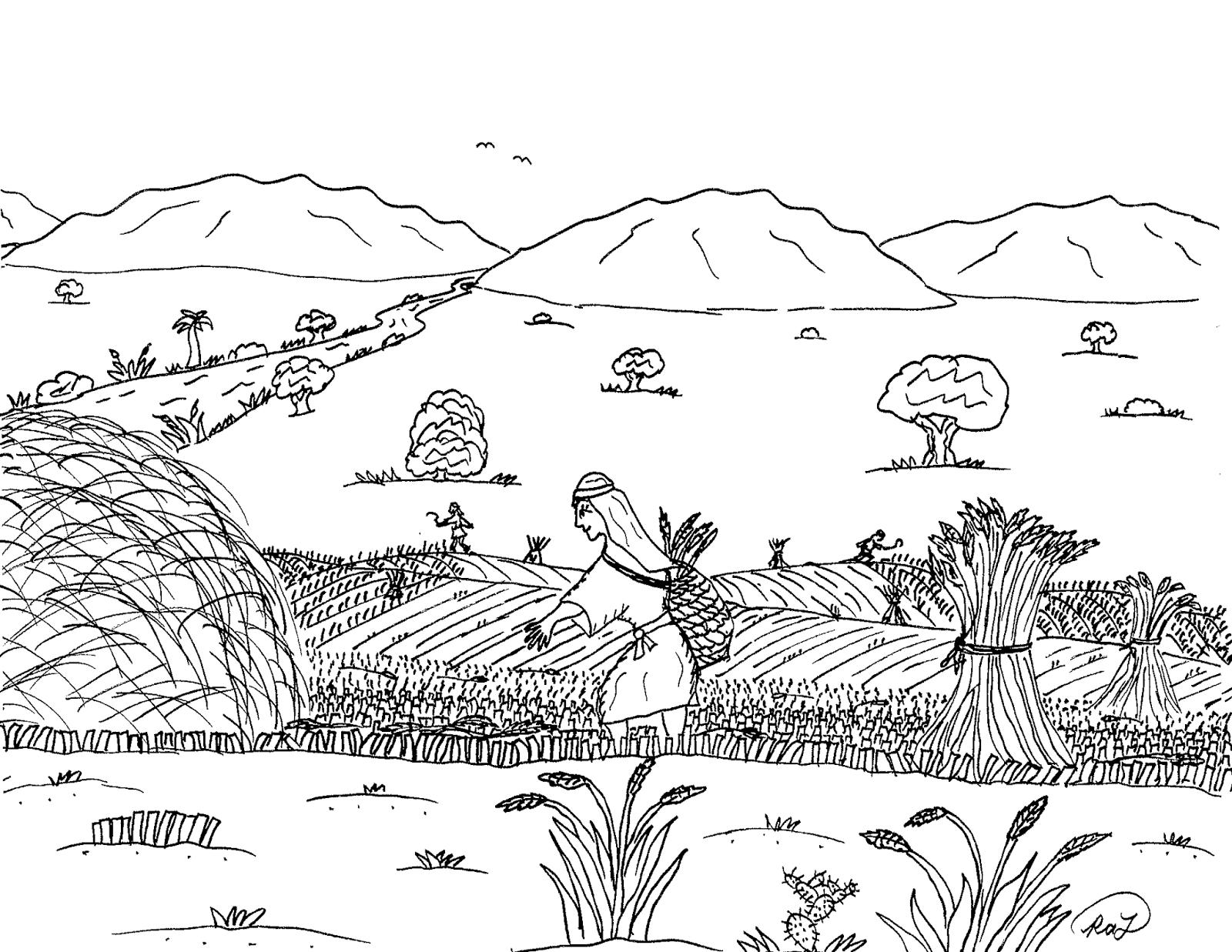 Tranh tô màu cánh đồng lúa