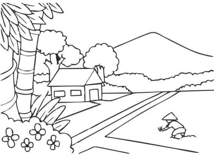 Tranh tô màu phong cảnh cấy lúa