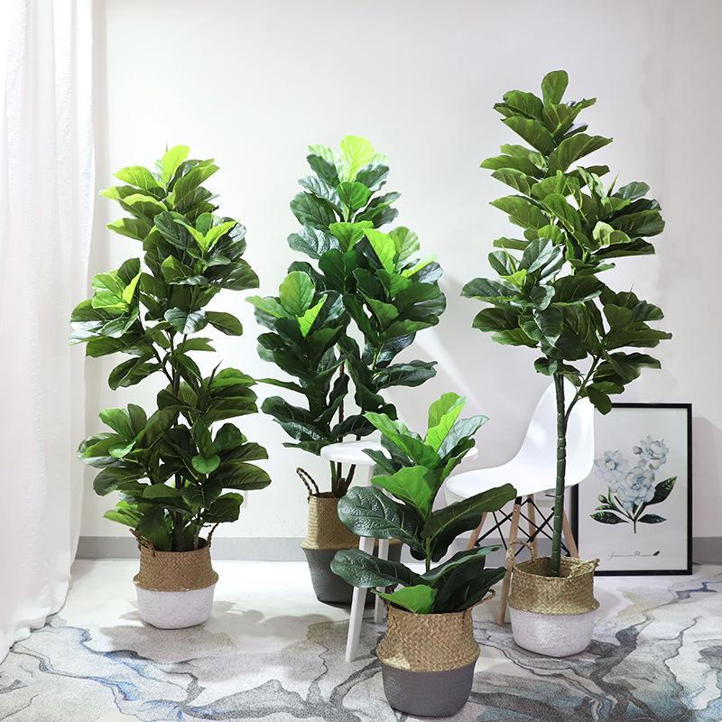 Ảnh cây bàng Singapore đẹp nhất