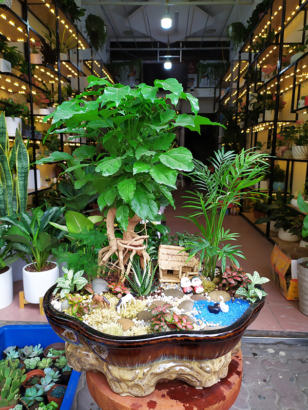 Chậu cây Hạnh phúc Bonsai cực đẹp