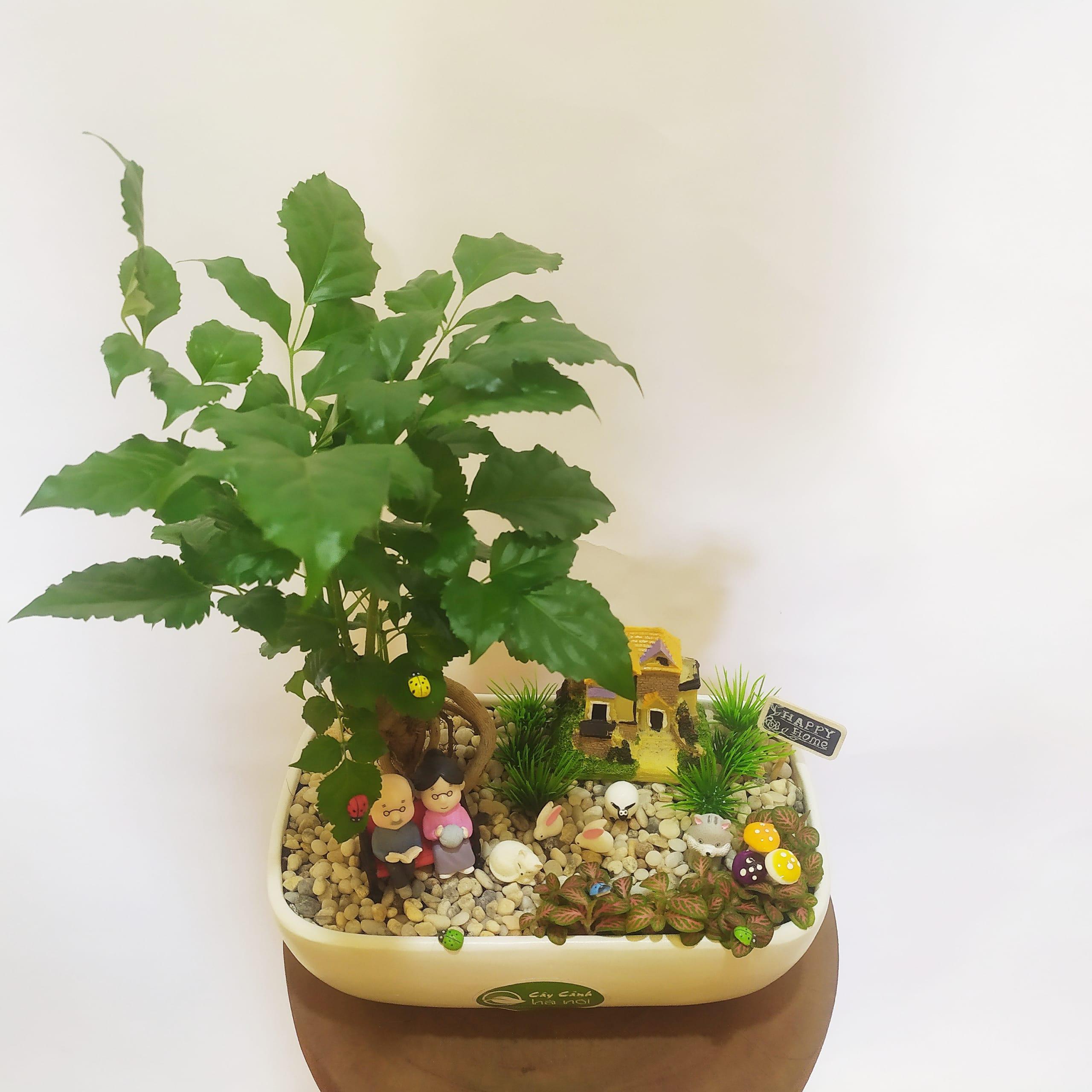 Hình ảnh chậu cây Hạnh phúc đẹp