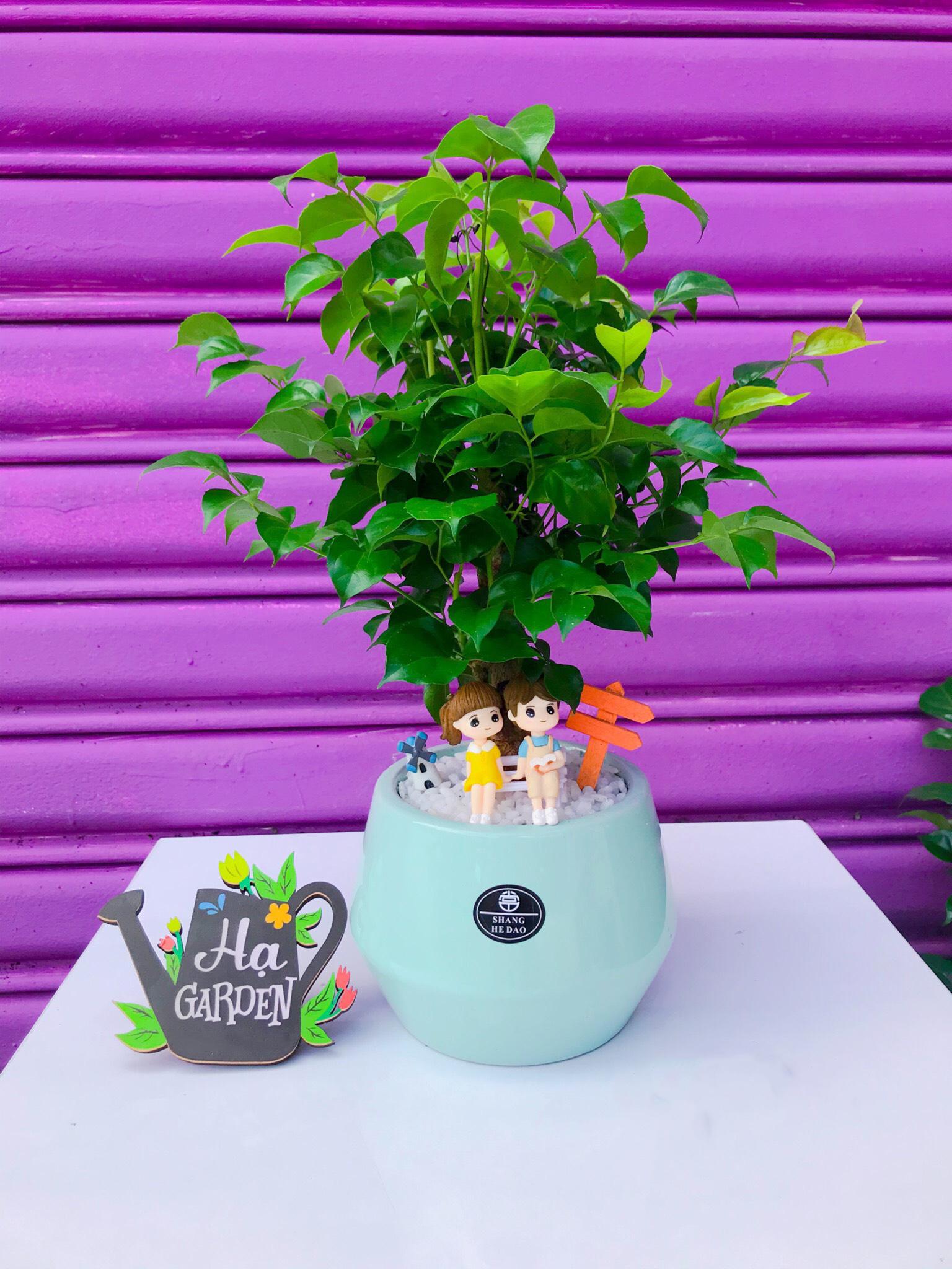 Lợi ích khi trồng cây Hạnh phúc