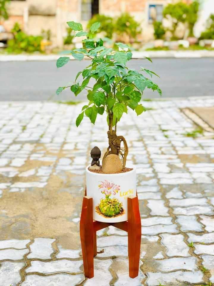 Mẫu cây Hạnh phúc để bàn