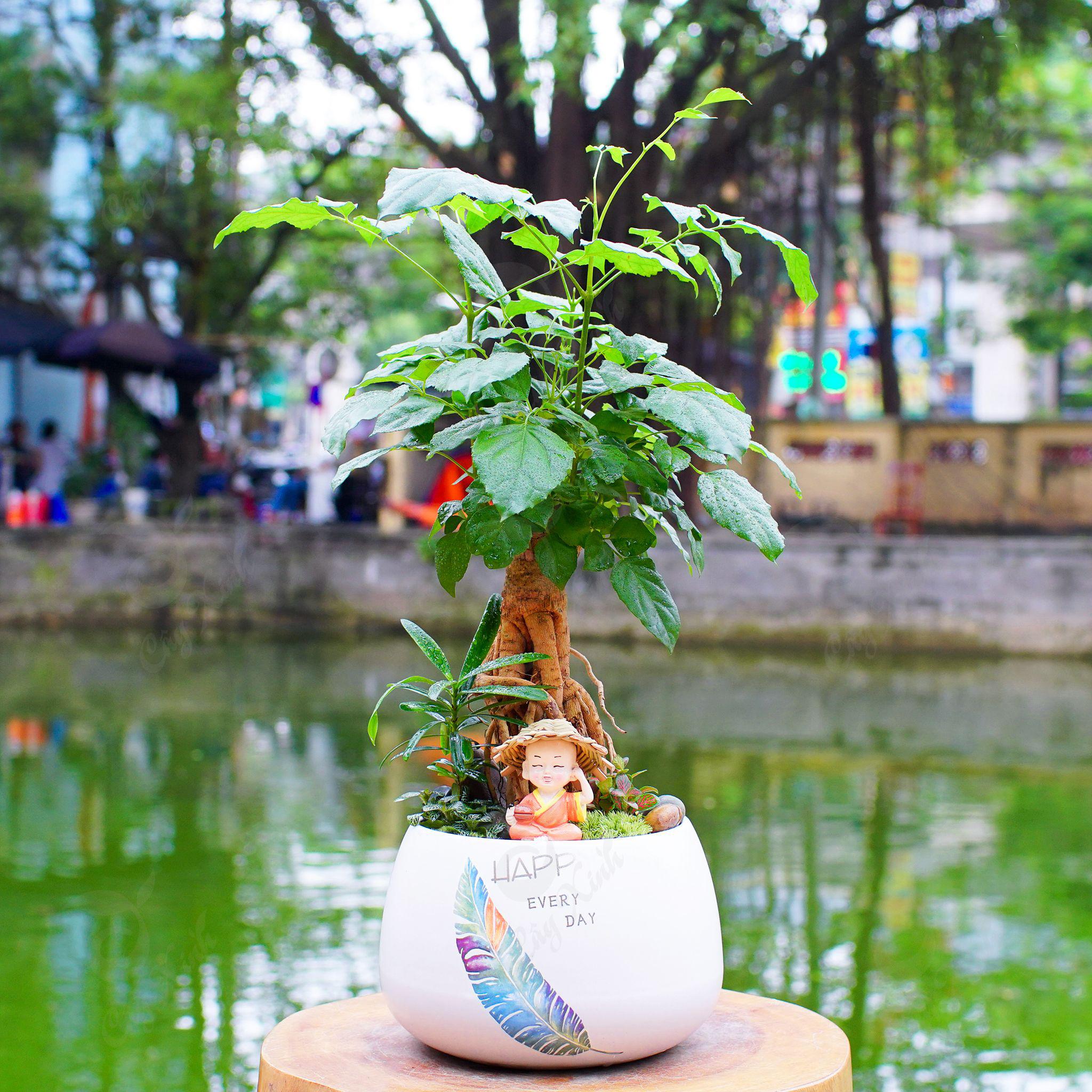 Mẫu chậu cây Hạnh phúc để bàn đẹp