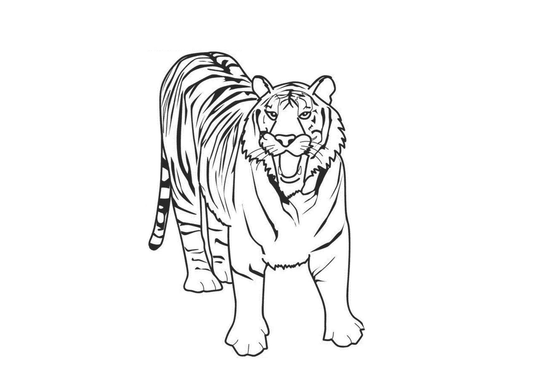Tranh tô màu con hổ cho bé đẹp
