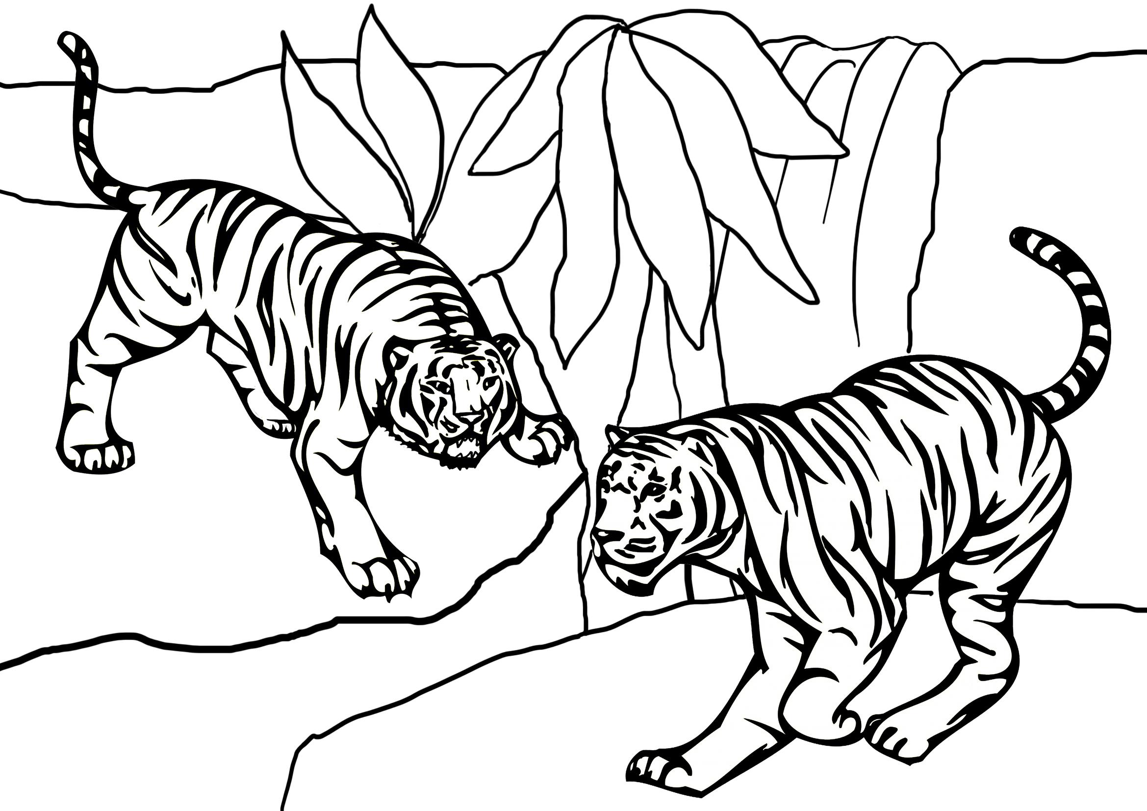 Tranh tô màu con hổ cực đẹp