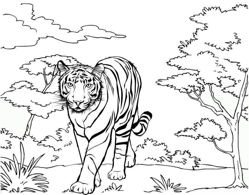 Tranh tô màu con hổ đi dạo