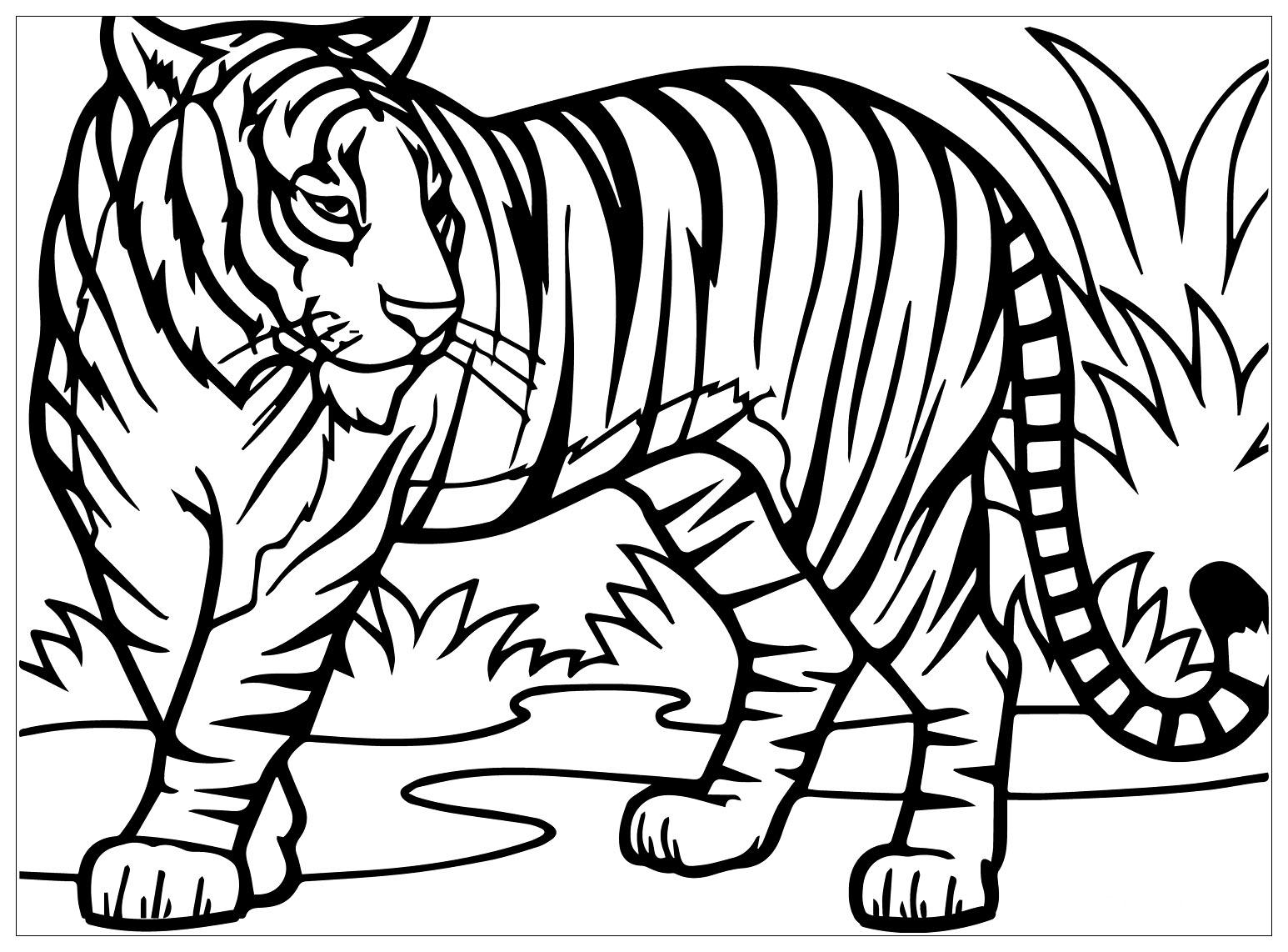 Tranh tô màu con hổ trên bãi cỏ