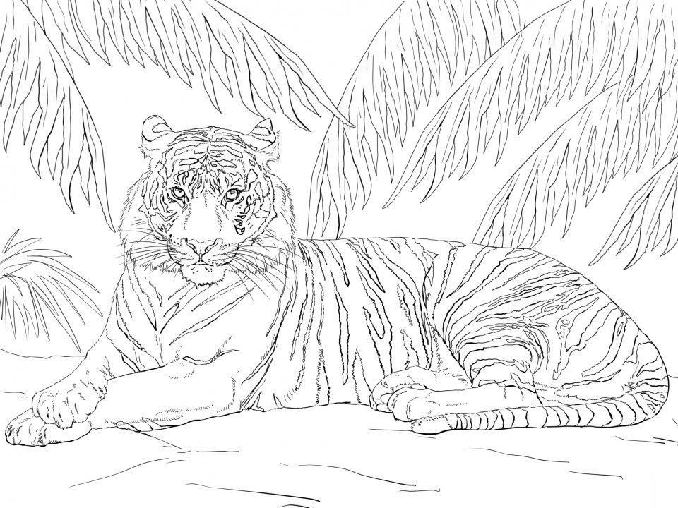 Tranh tô màu con hổ tuyệt đẹp