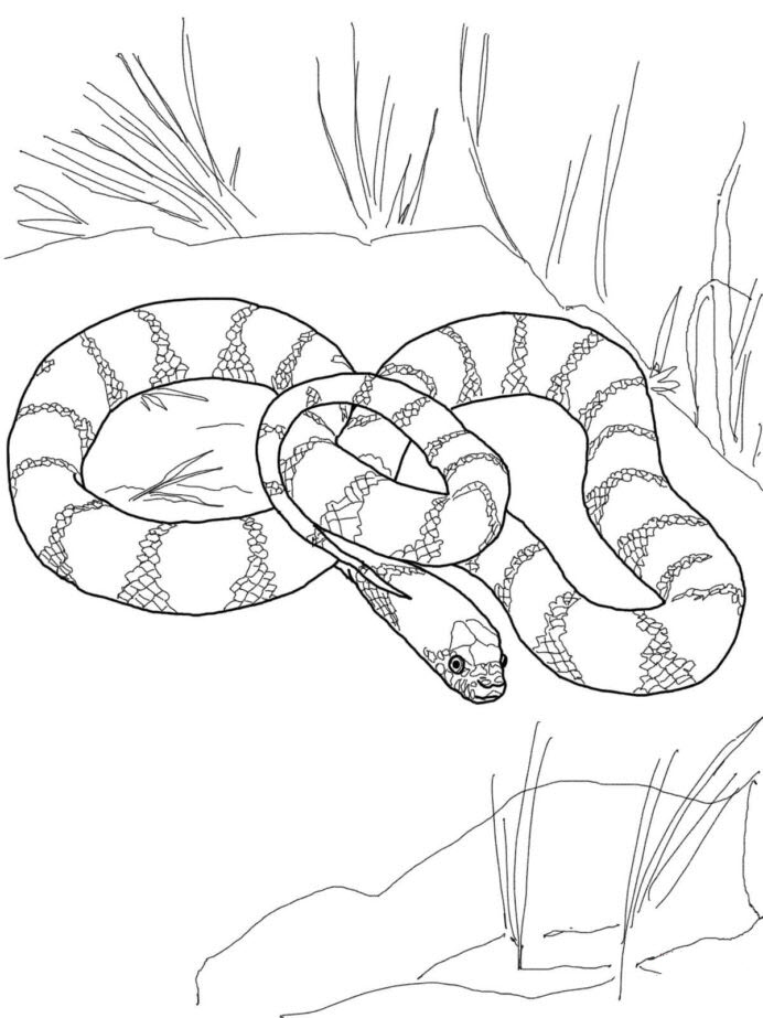 Tranh tô màu con rắn đang nằm
