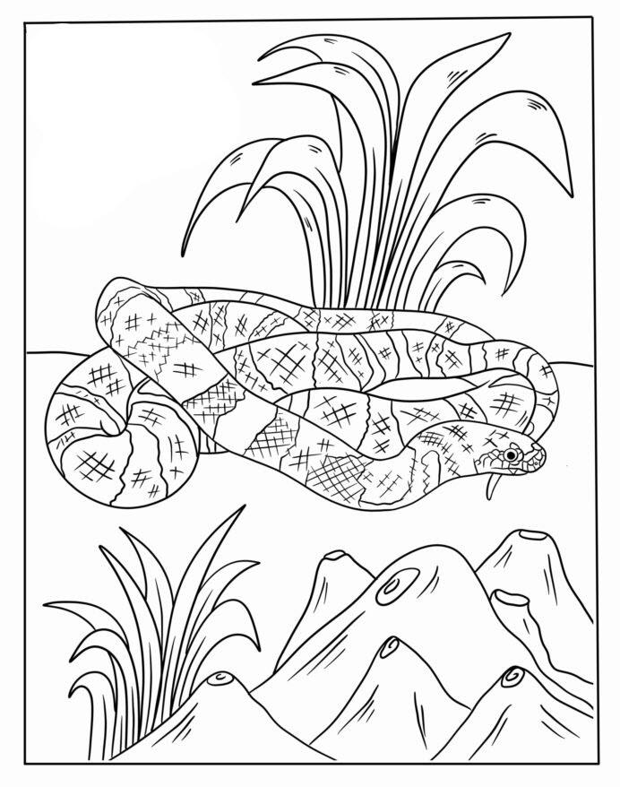 Tranh tô màu con rắn đẹp, chân thật nhất